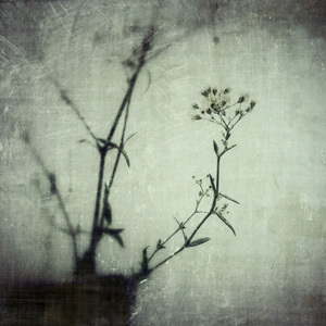 iPhoneography - modern grunge