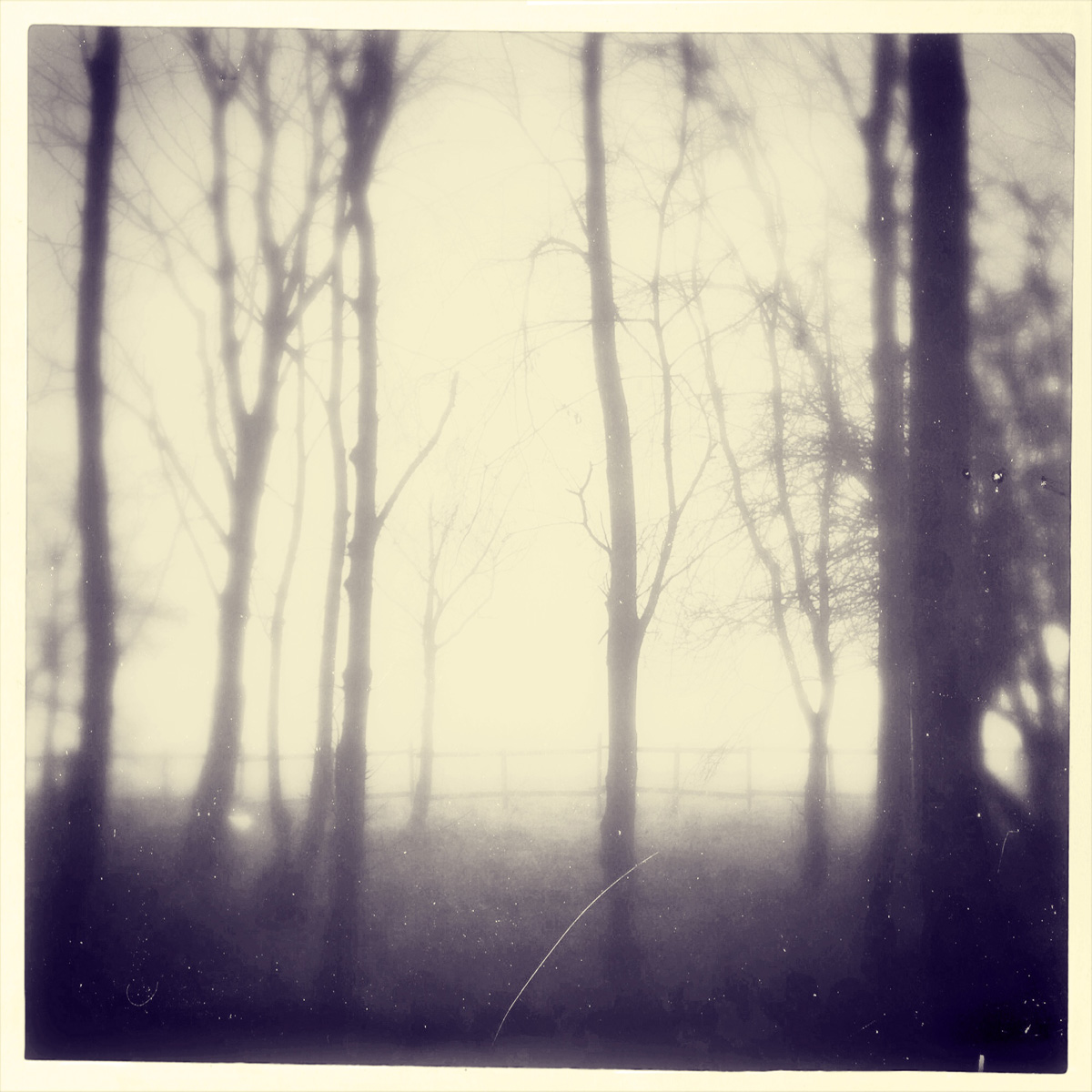 iphoneography - foggy trees 5